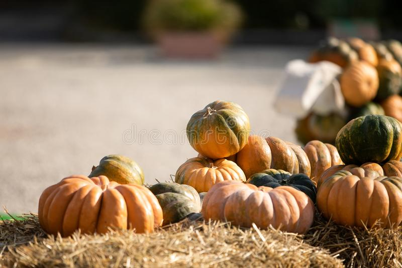 Orange and green pumpkins at outdoor farmer market. Colorful autumn Thanksgiving background with copy space for your stock images