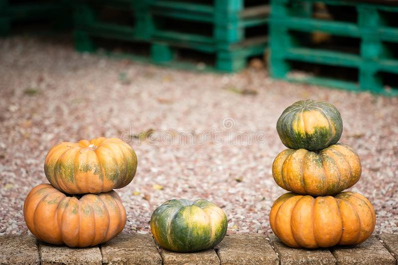 Orange and green pumpkins at outdoor farmer market. Colorful autumn Thanksgiving background with copy space for your royalty free stock image