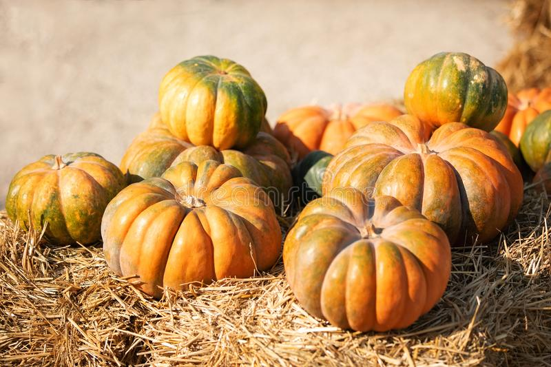 Orange and green pumpkins at outdoor farmer market. Colorful autumn Thanksgiving background with copy space for your royalty free stock photography