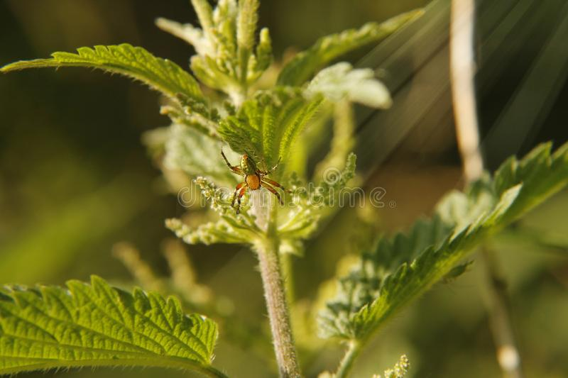 Download Orange and green spider stock photo. Image of green - 118263126