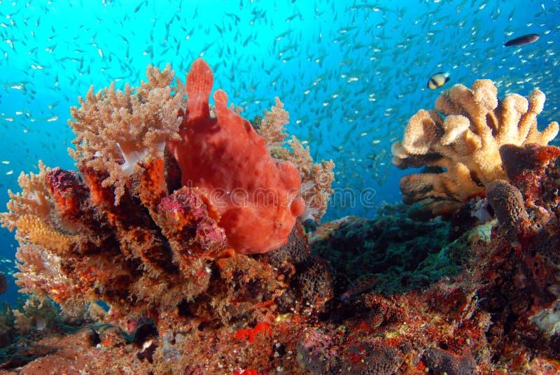 Orange grodafisk royaltyfria bilder