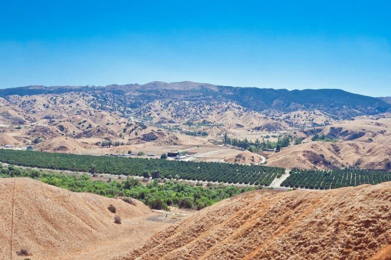Orange Grove from Above. Orange grove in Southern California stock image