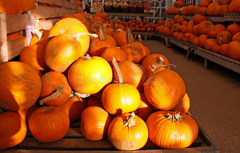 Orange Halloween-Kürbise in einem System lizenzfreie stockfotos