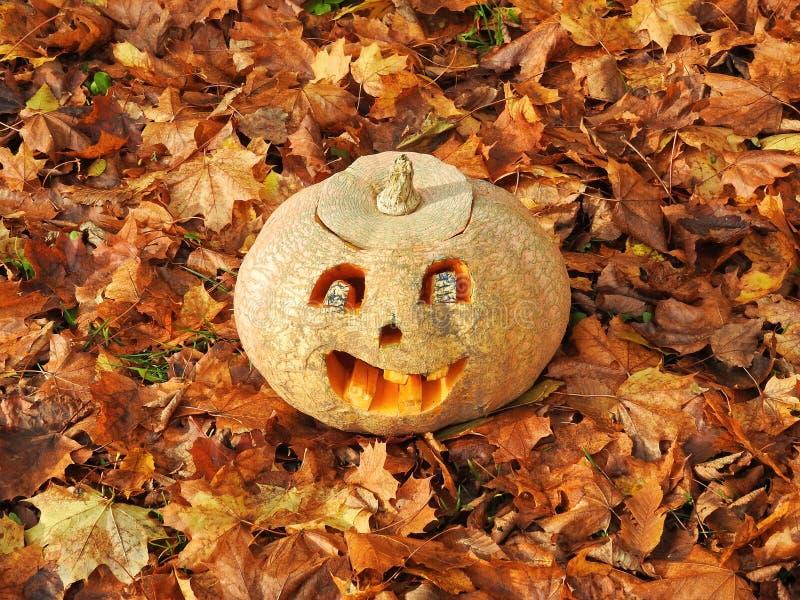 Orange halloween pumpkin royalty free stock image