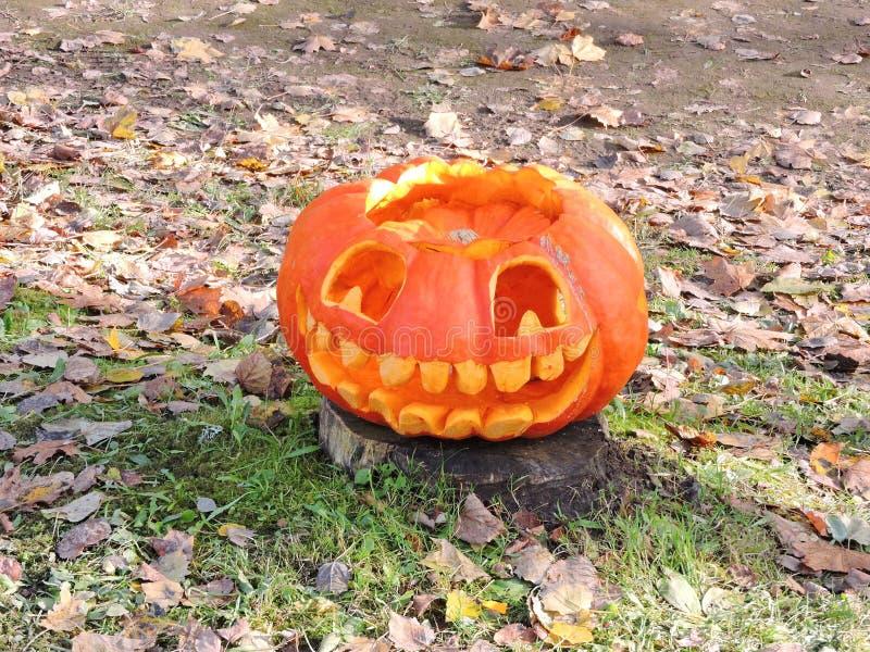 Orange halloween pumpkin stock photo