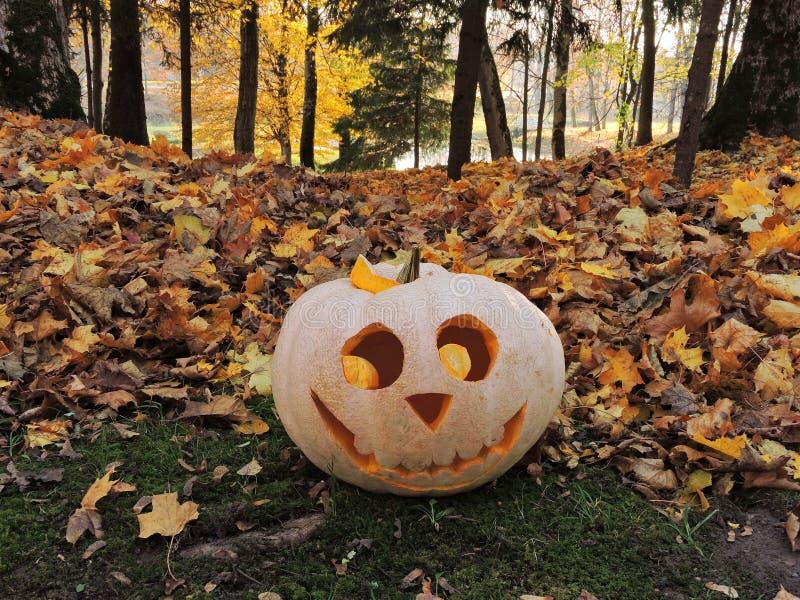 Orange Halloween pumpkin royalty free stock photography