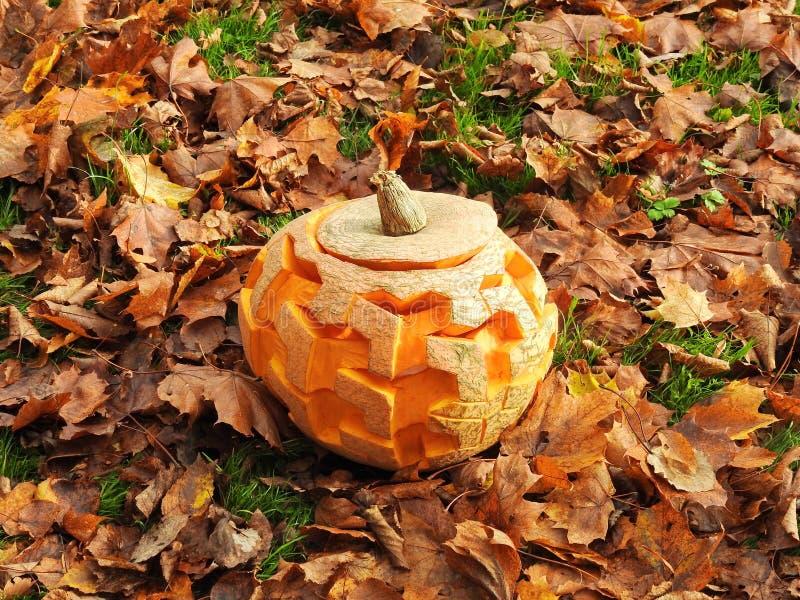 Orange halloween pumpkin stock photos