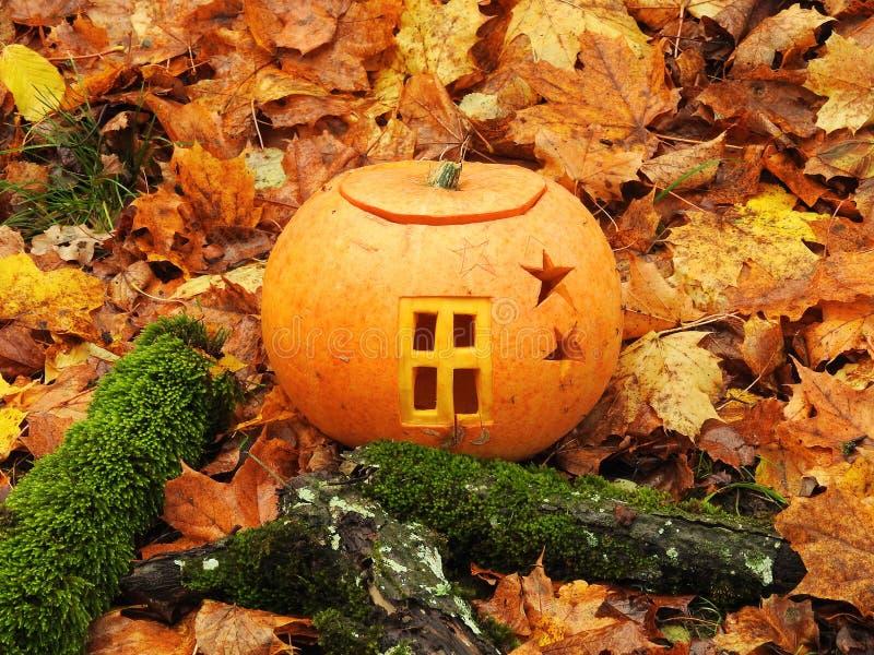Orange halloween pumpkin royalty free stock photos