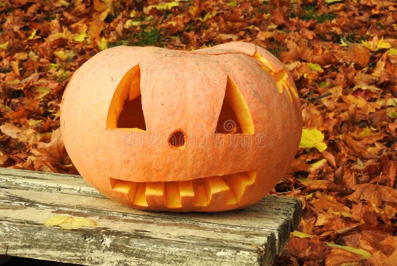 Orange halloween pumpkin royalty free stock images