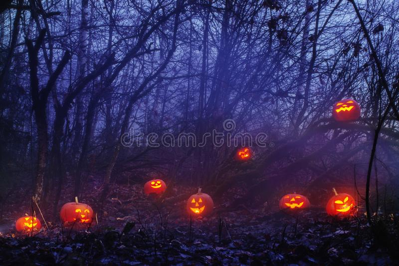 Halloween pumpkins in night forest. Orange Halloween pumpkins in night forest royalty free stock photos