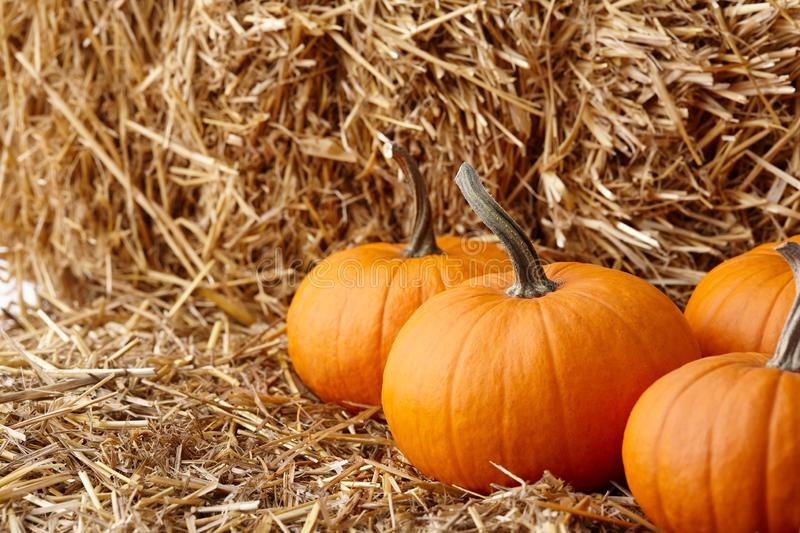 Orange halloween pumpkins on stack of hay or straw stock photo