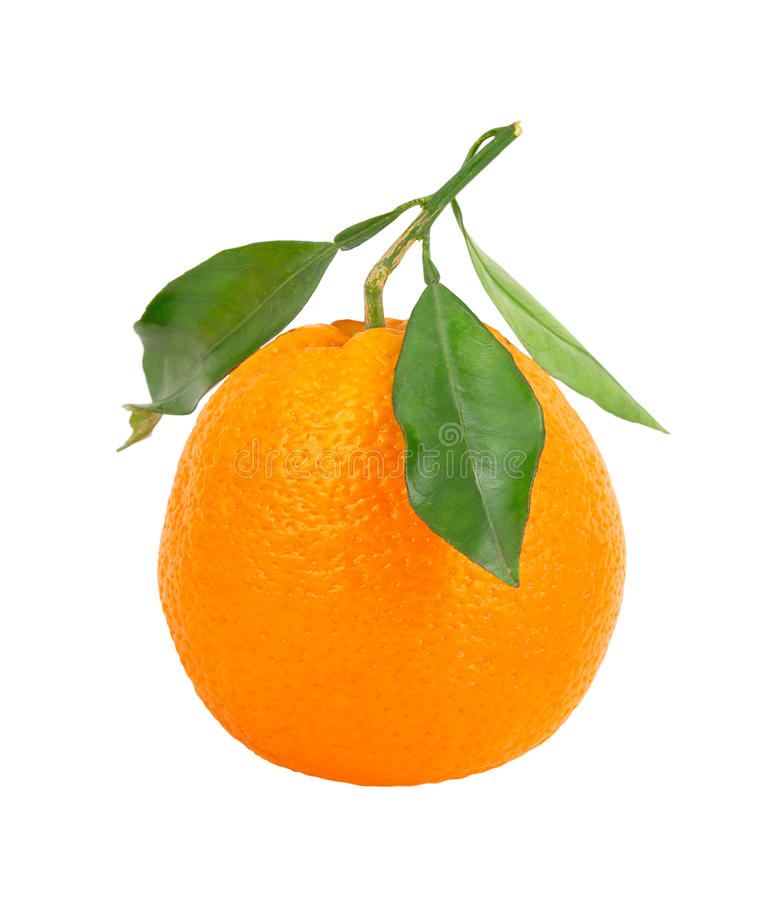 Download Orange isolated on white stock image. Image of ingredient - 27456719