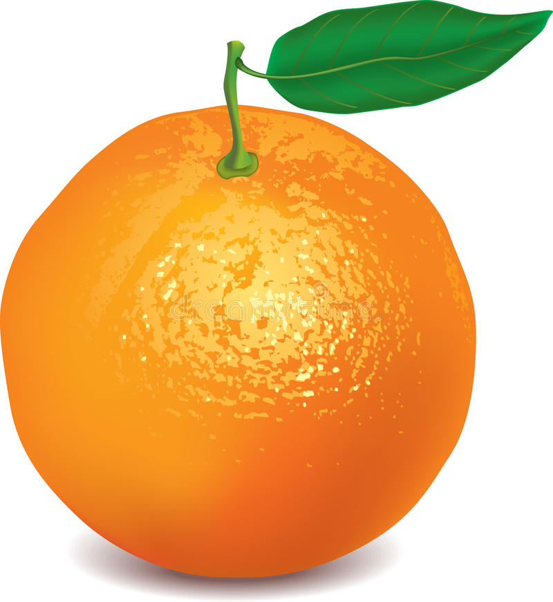 Orange isolated on white photo-realistic. Vector illustration stock illustration