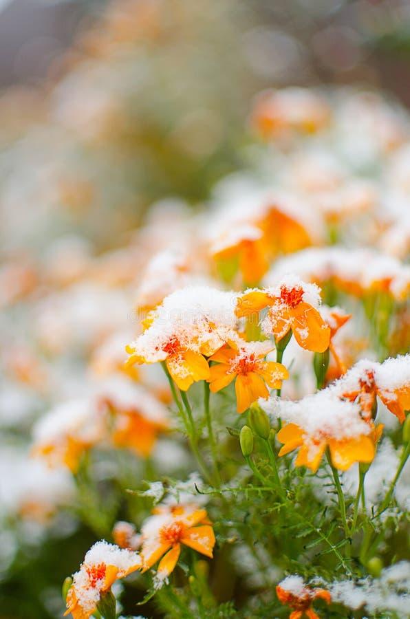 Orange juice flowers grow in the fresh air stock image