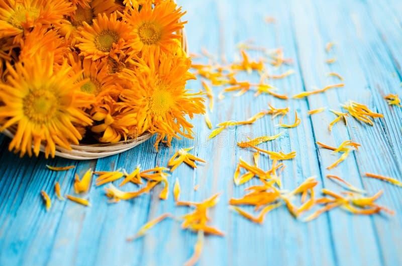 Orange juice flowers grow in the fresh air stock images