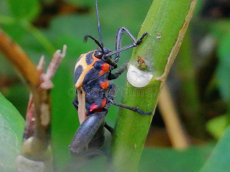 Orange Käfer stockfoto