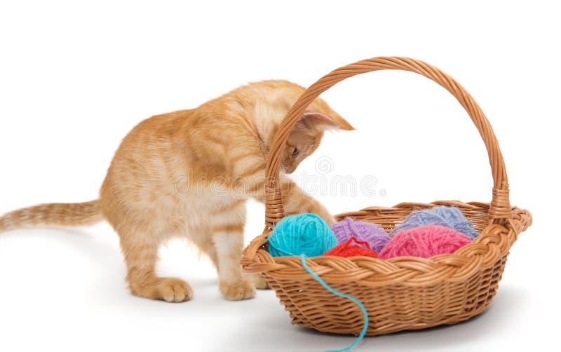 Orange Kätzchen der getigerten Katze stockbild