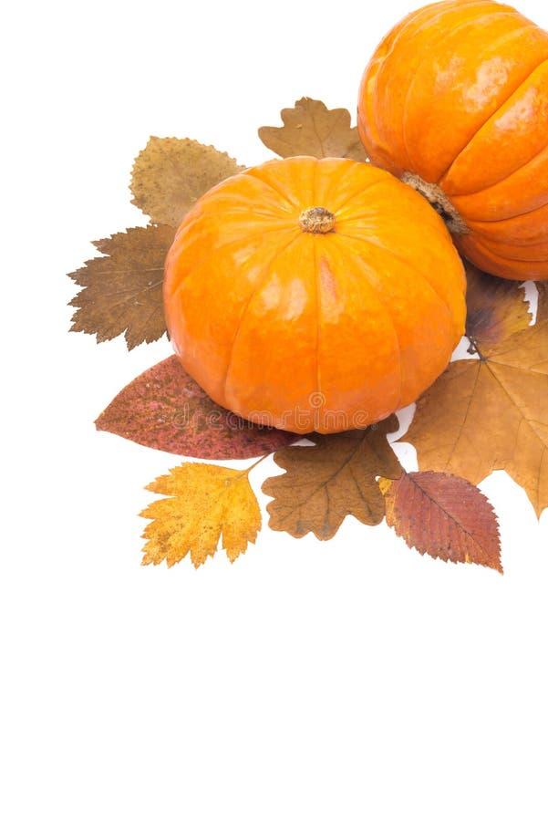 Orange Kürbis auf dem Herbstlaub lokalisiert und Raum für Text lizenzfreie stockfotografie