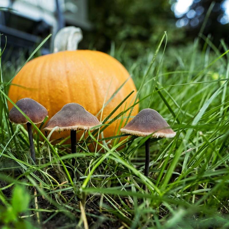 Orange Kürbis, der aus den Grund mit drei Pilzen sitzt lizenzfreies stockbild