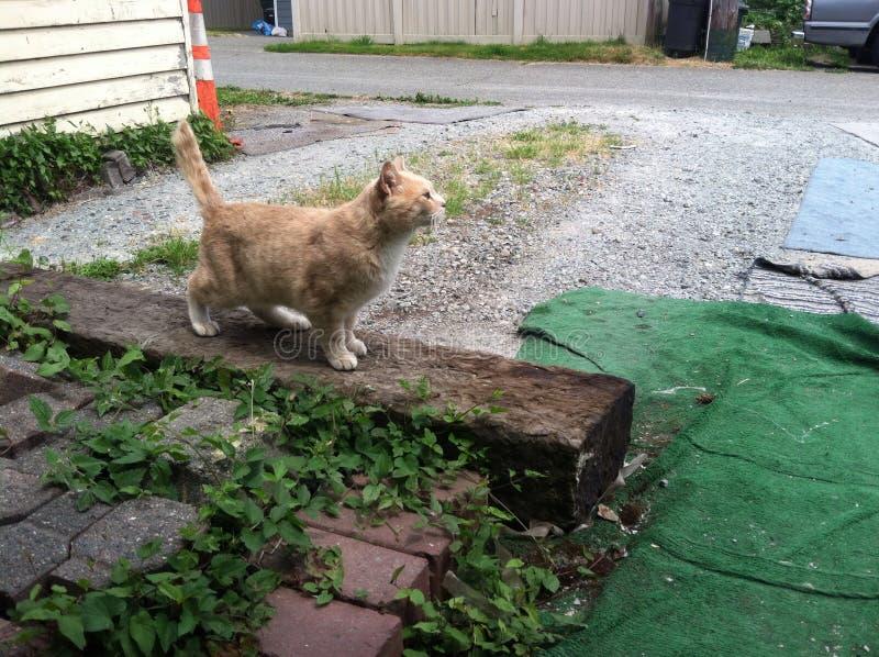 Orange katt royaltyfri foto