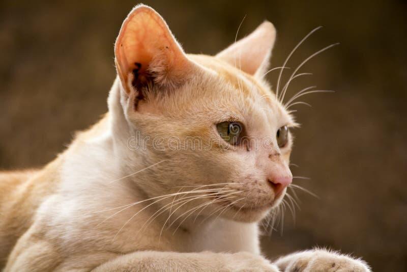 Orange katt som ser sidan arkivbilder