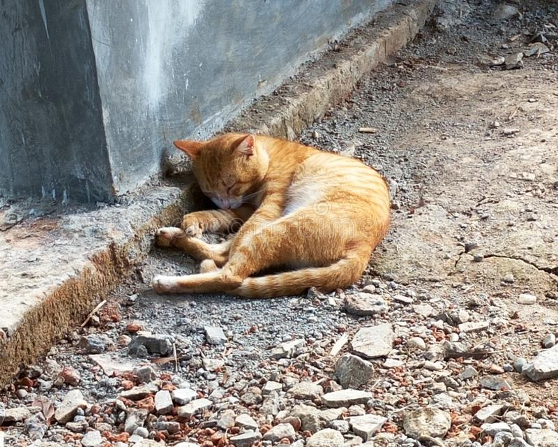 Orange kattsömn på jordningen royaltyfria bilder