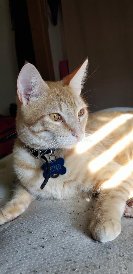Orange kattunge fotografering för bildbyråer