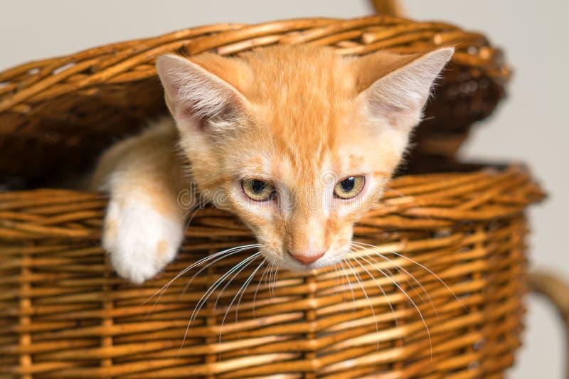 Orange kattunge som flyr från picknickkorg arkivfoto