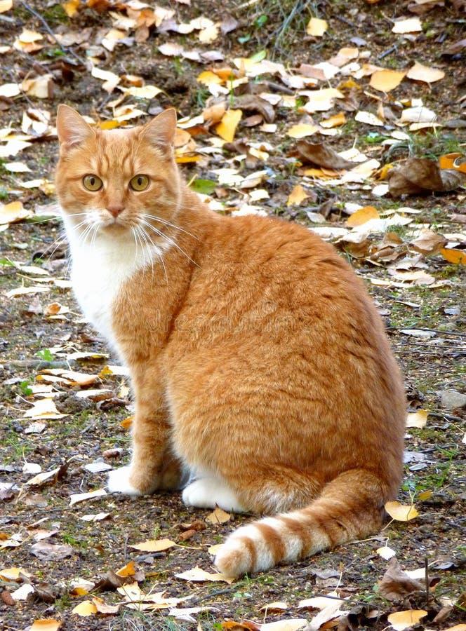 Orange Katze, die aus den Grund sitzt lizenzfreies stockbild