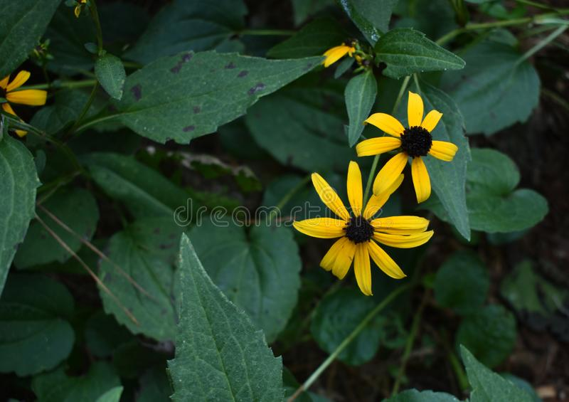 Orange Kegel-Blume stockbild