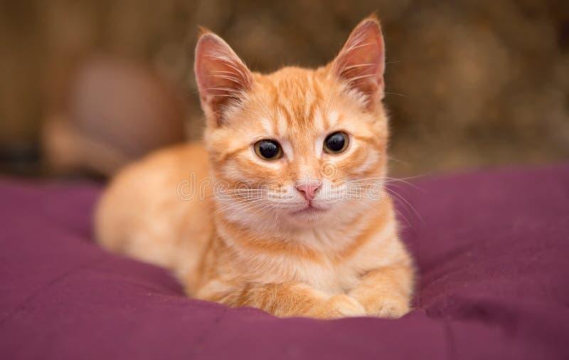 Orange kitten lie on the bed