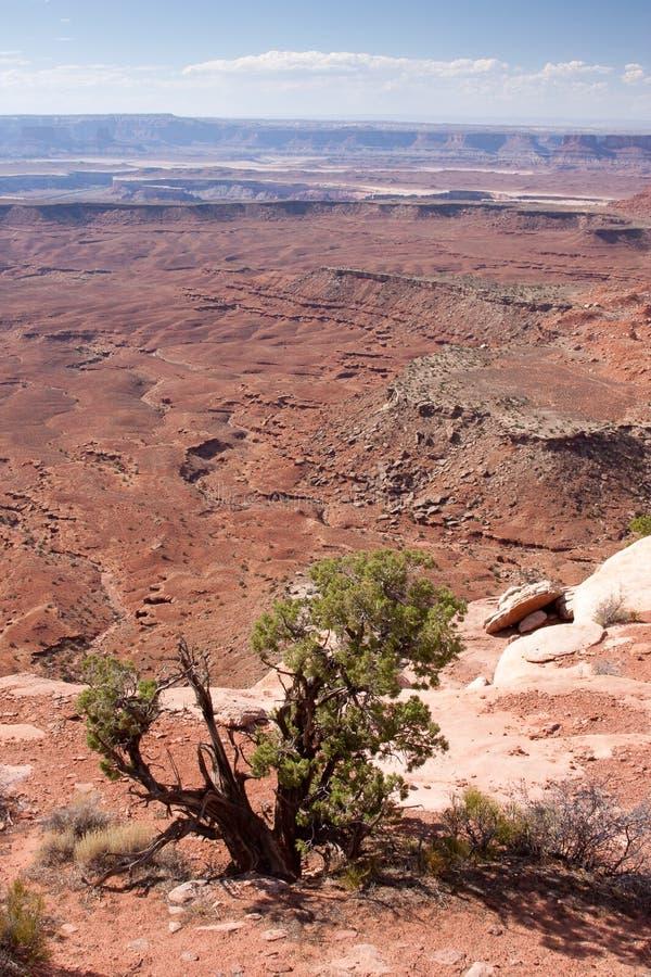 Orange Klippen übersehen bei Canyonlands stockbilder