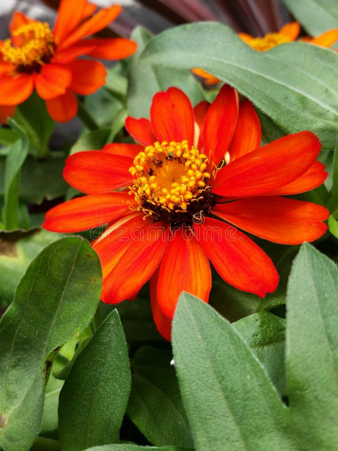 Orange Knall stockbilder