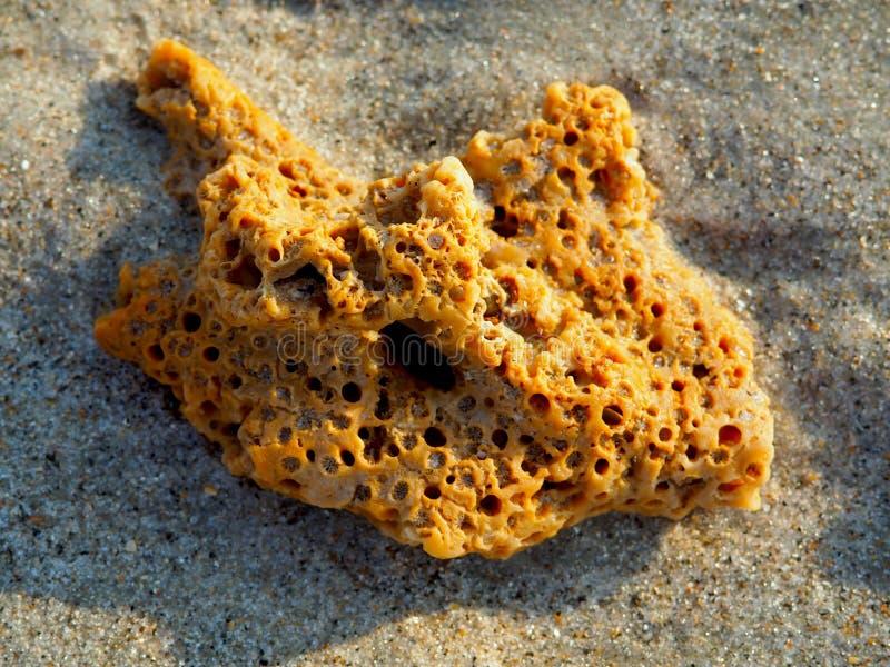 Orange korall på Carolina Beach arkivbilder