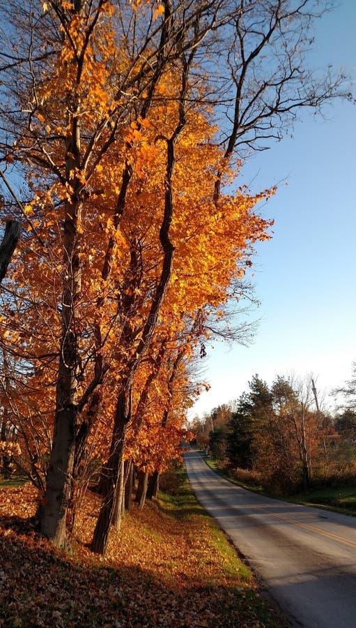Orange lönnträd längs en tyst landsväg på en härlig höstdag arkivfoton