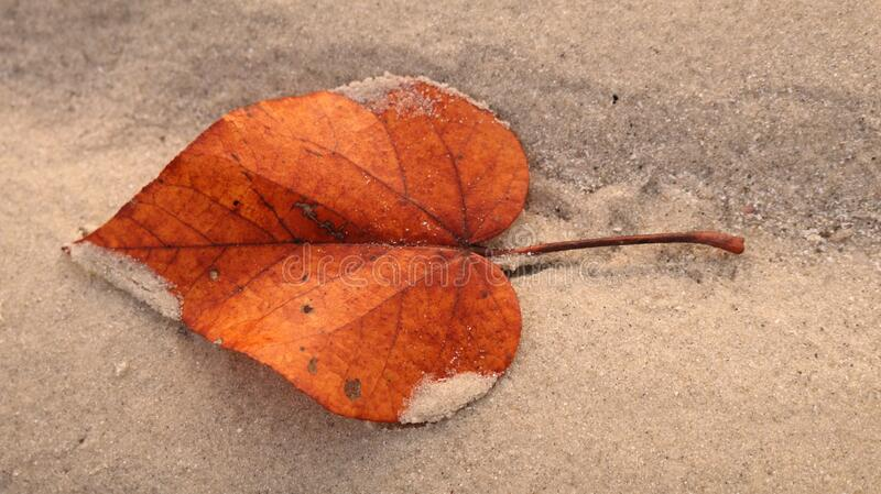The orange leaf on the beach. stock photography