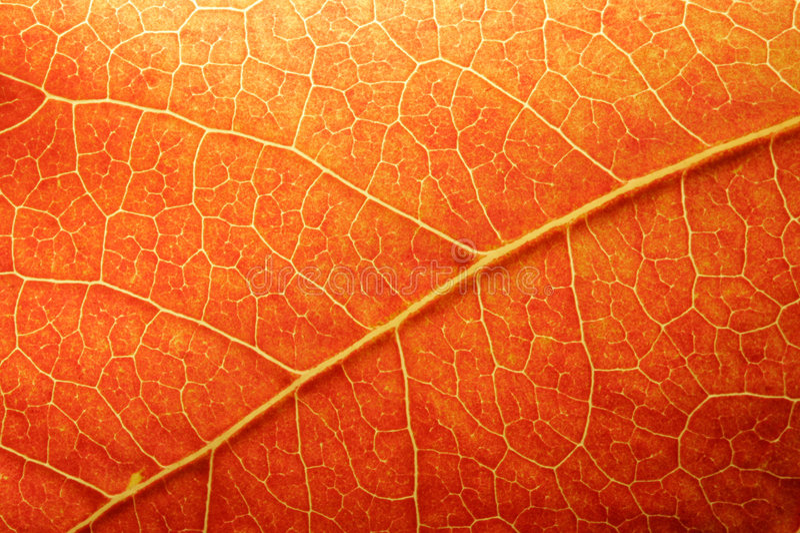 Orange Leaf Closeup stock photos
