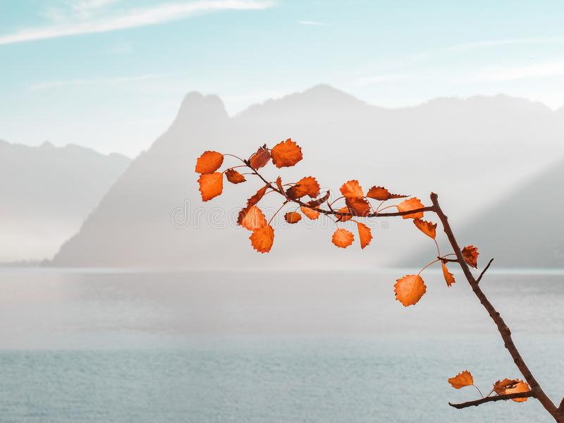 Orange Leaf Plant Near Sea and Mountains at Daytime stock photography