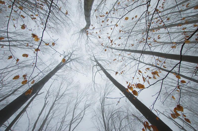 Download Orange Leafs On Tree Branches In Autumn Forest Stock Image - Image: 27184693