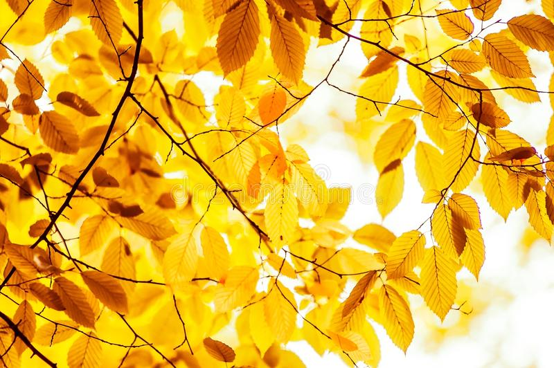 Download Orange leaves stock image. Image of beauty, foliage, natural - 28851629