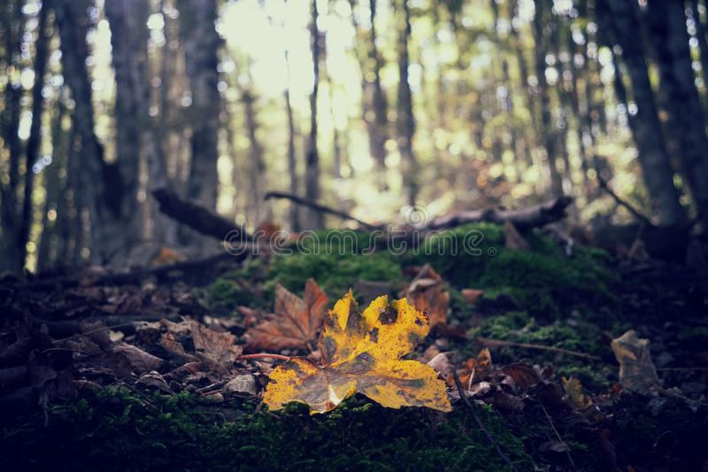 Orange leaves on the ground. Concept of fall and autumn. Orange leaves on the ground in a forest. Concept of fall and autumn stock photo