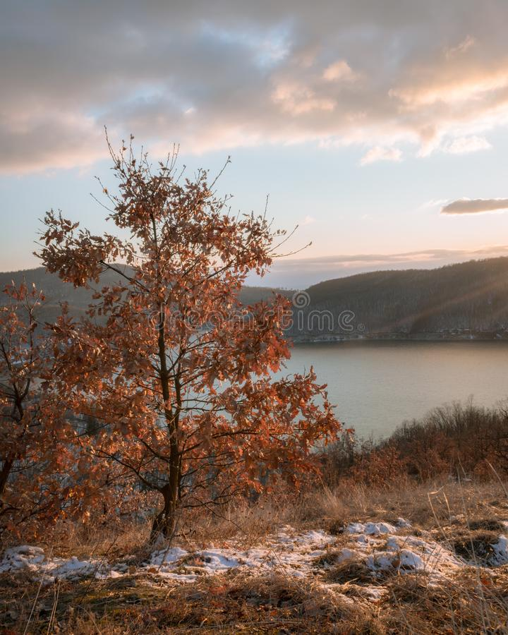 An orange leaves Oak tree up in the hill royalty free stock photos