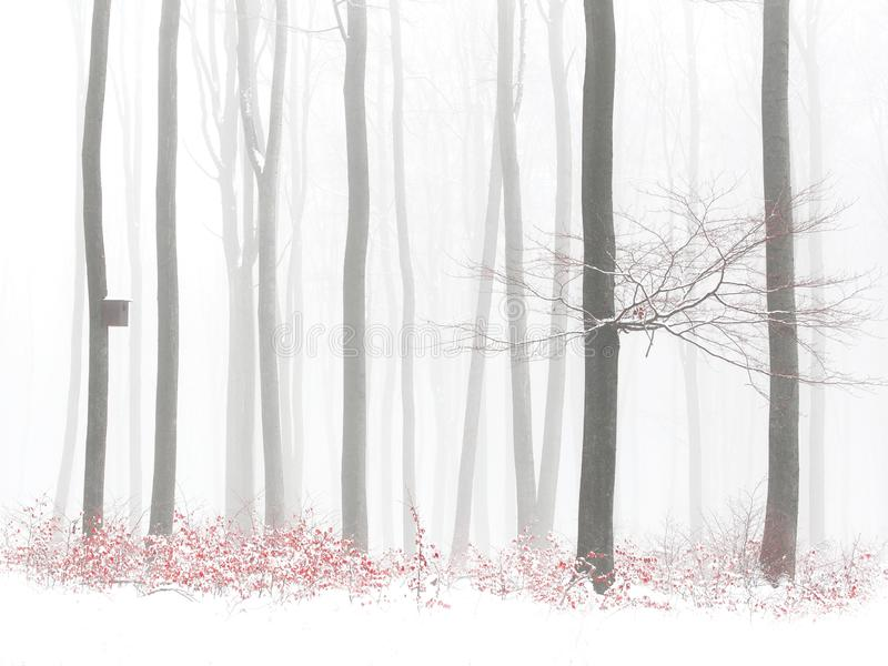 Orange leaves in winter snowy forest, birdhouse on tree, fog stock photo
