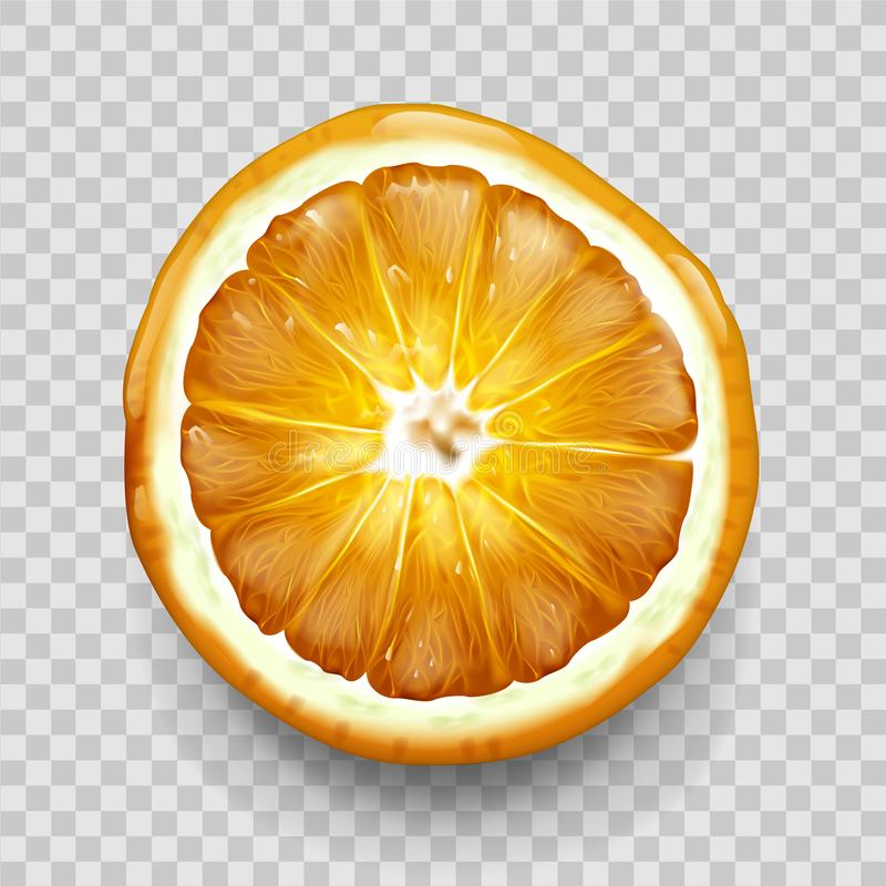 Orange or lemon cut in half top view. Citrus fruit. Orange or lemon cut in half slice top view isolated on transparent background. Citrus fruit design element vector illustration