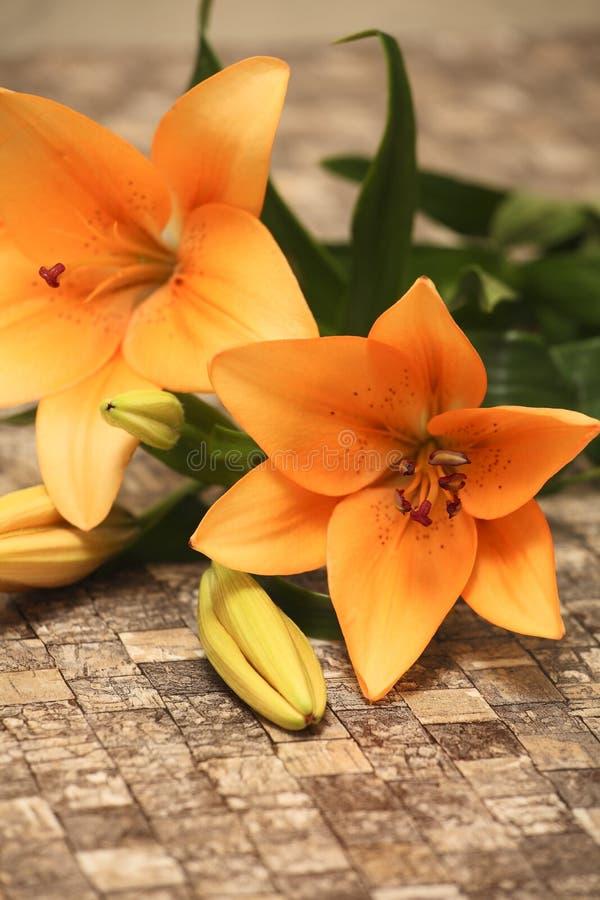 Orange lilja arkivfoto