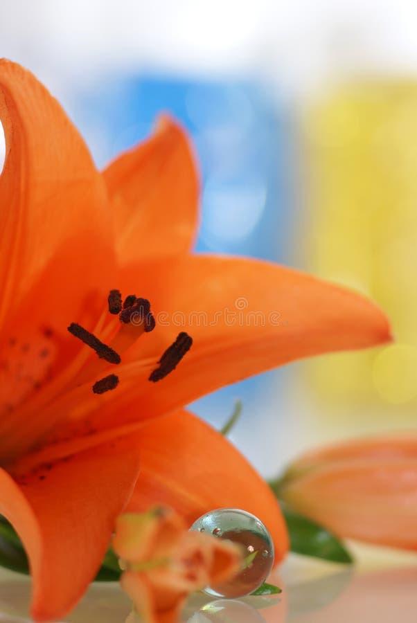 Free Orange Lily Stock Image - 4141071
