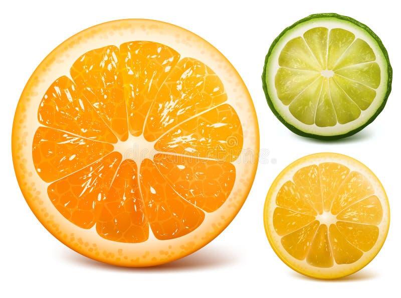 Download Orange, lime and lemon. stock vector. Image of juicy - 20411428