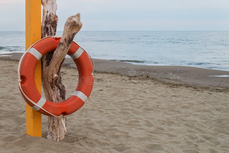 Orange livboj som hänger på en torr död stam på en strand royaltyfria foton