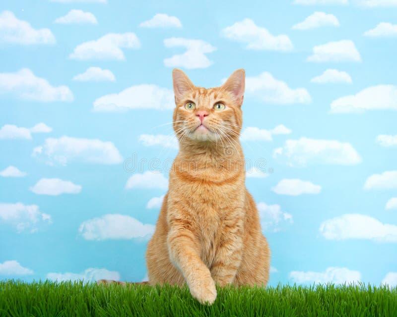 Orange ljust rödbrun sammanträde för strimmig kattkatt i högväxt nå för gräs arkivbild
