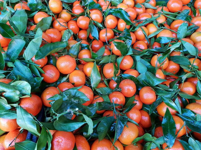 Orange mandarins, tangerines or clementine. With green leaves as background stock images